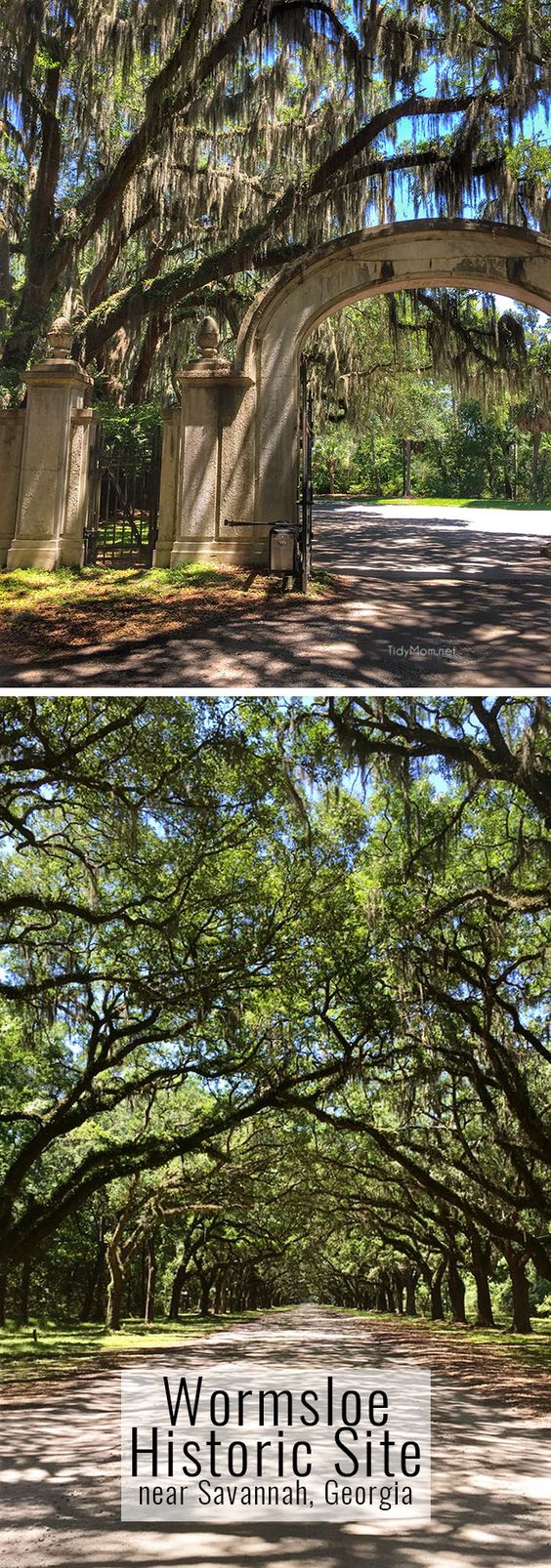 Wormsloe Historic site near Savannah, Georgia. A breathtaking 1.5 mile avenue sheltered by live oaks and Spanish moss. More…