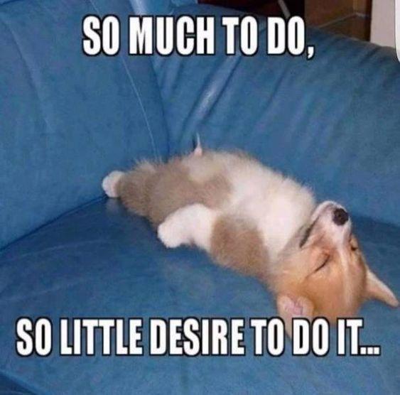Corgi Dog Meme Funny Dog Memes Pet Memes Funny Pet Memes Dog Humor Pet Humor Cute Puppy Memes Funny Animal Memes Funny Cute Dog Memes Funny Dog Memes
