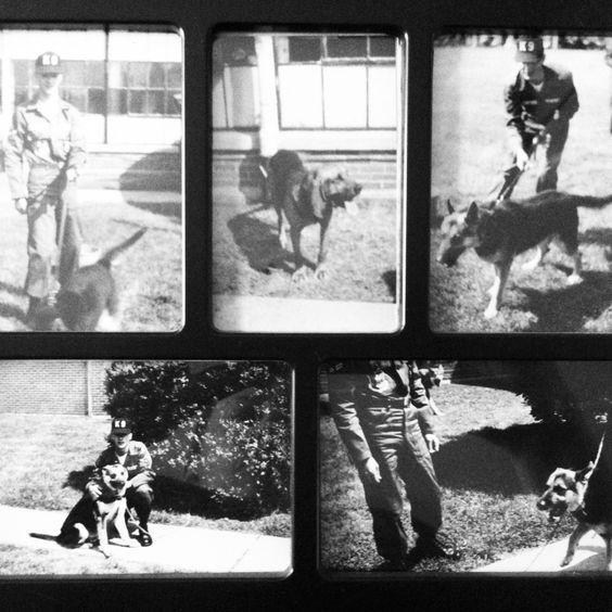 Airman, canine unit, United States Air Force, my Dad, circa 1964