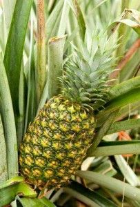 How to pick a perfect pineapple!