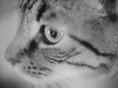 Cat Face Closeup