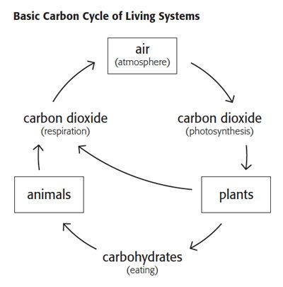 wizer free interactive carbon cycle Biology cycles blended