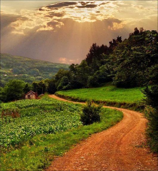 Path+to+summer+landscape_Katarina+Stefanovic_1087.jpg (530×575)