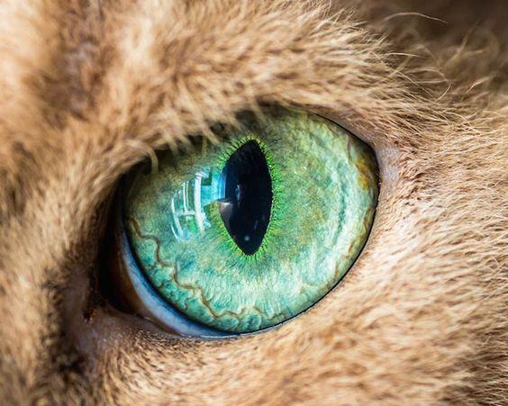 Plongez dans les yeux des chats avec les jolies photographies d'Andrew Marttila, aka Crazy Cat Man, un photographe américain basé àPhiladelphie, spécialis