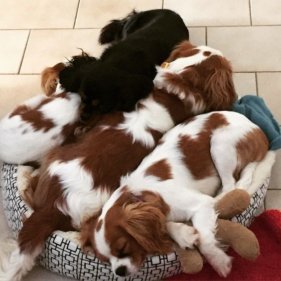 Darla, Duchy, Lulu and Phoebe. There were 4 in the bed!! I think that's about 3 too many!!