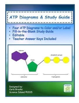 ATP Diagrams & Study Guide Chemical Energy for Cellular