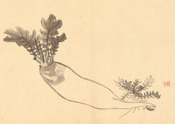 Déterrage de radis – Avec le radis, le chemin – m'est indiqué. | L'art du Haiku