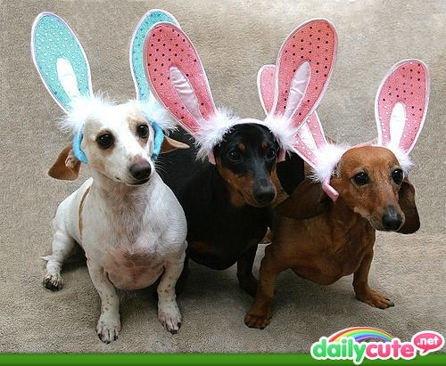 Pin By Dawn Morris On Happy Easter With Images Easter Dog