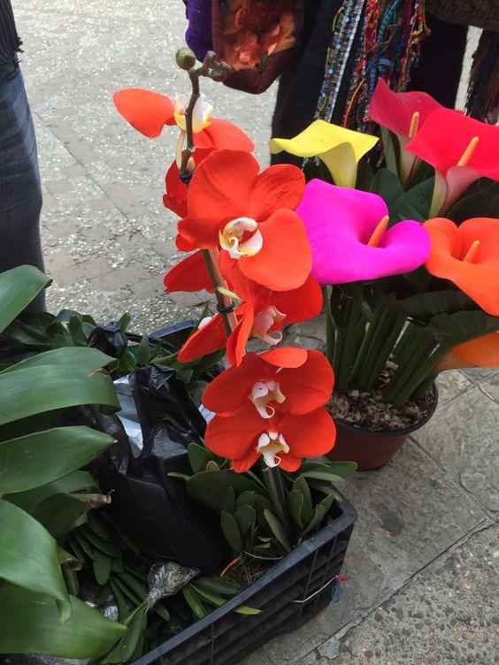 Orquídea de Chiapas