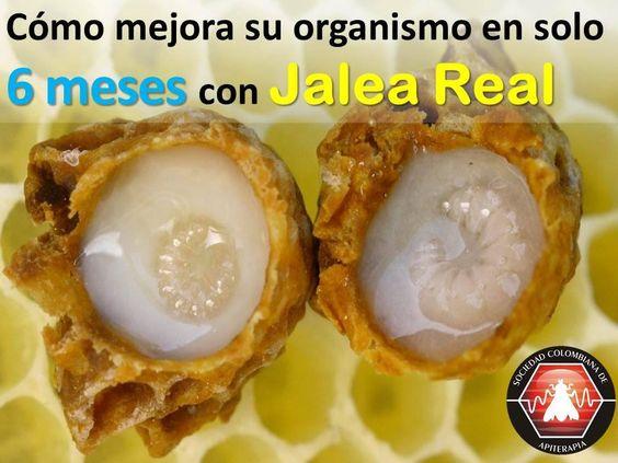 Conozca como su organismo mejora asombrosamente en 6 meses con jalea real:  http://bit.ly/1rj70SX #apiterapia