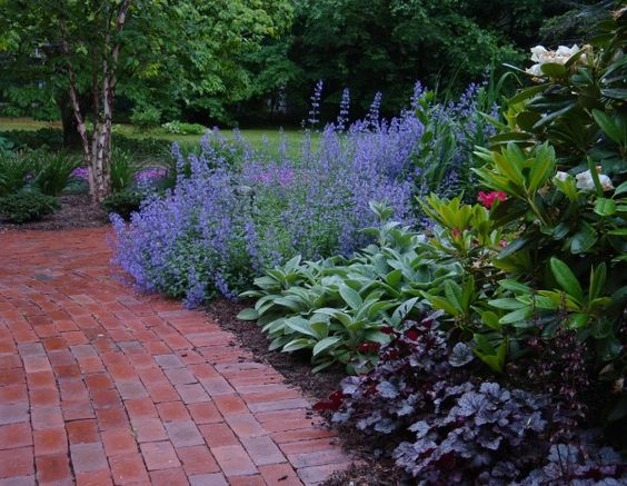 Lavendar and other plants gardens pinterest low for Low maintenance landscaping flowers