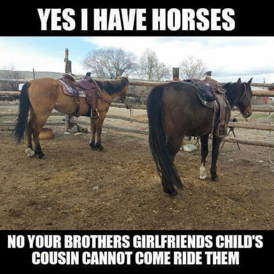 ❤️this | Horse jokes, Funny horse memes, Horse quotes funny