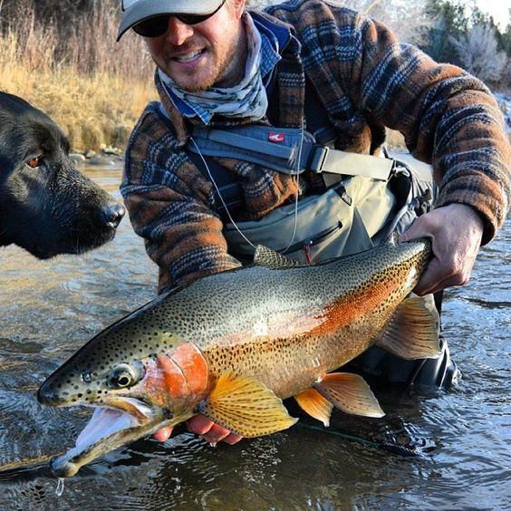 Pinterest the world s catalog of ideas for Fishing in durango co