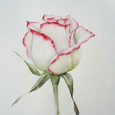Roses Rose Painting Watercolor Rose Flower Drawing