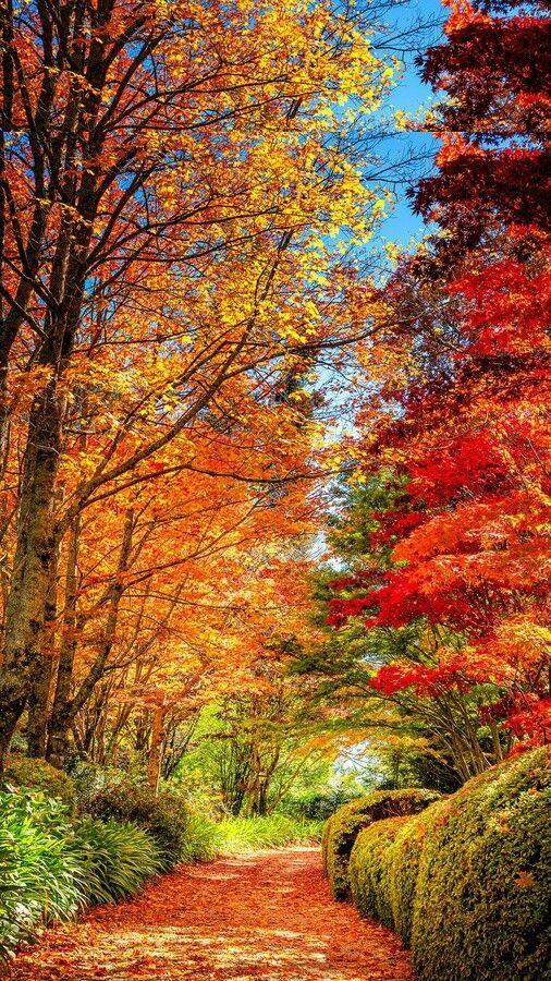 Fall Foliage Autumn Scenery Autumn Landscape Autumn Scenes