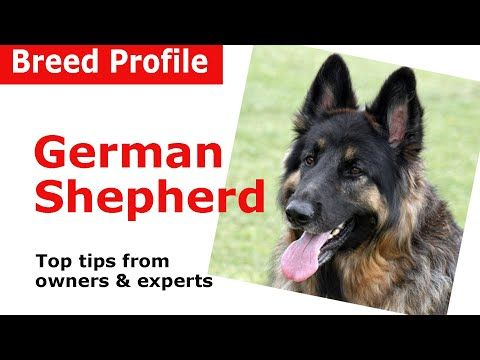 Top 5 Best Dog Foods For German Shepherds German Shepherd Dogs