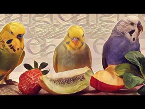 طيور البادجي Youtube Painting Art