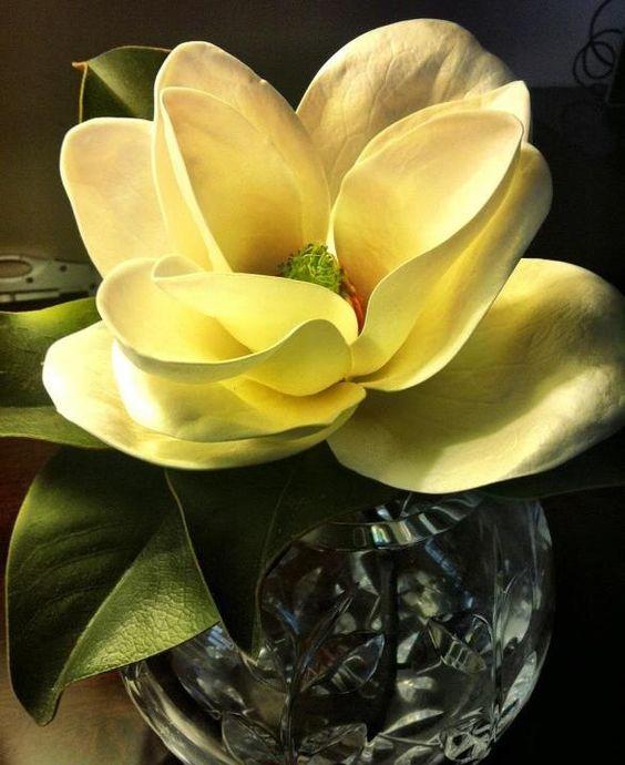 Magnolia in Tiffany & Co. vase.