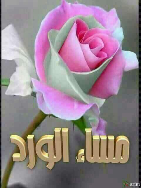Bonsoir A Tous Beautiful Rose Flowers Rose Flower Beautiful Roses