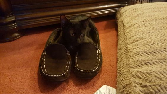 I am the man of the house... I wear the slippers!