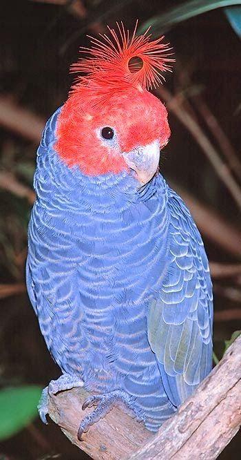 oiseaux divers - Page 2 A3b559ee7f9c19b3048bdf542a72e21c