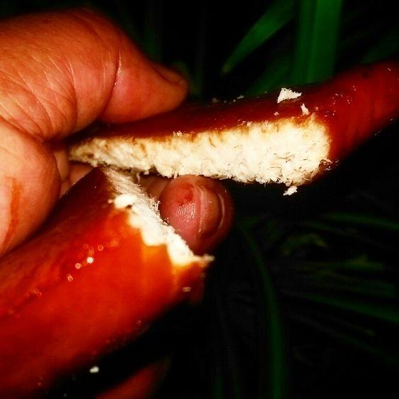 White king salmon ... Smoked to perfection