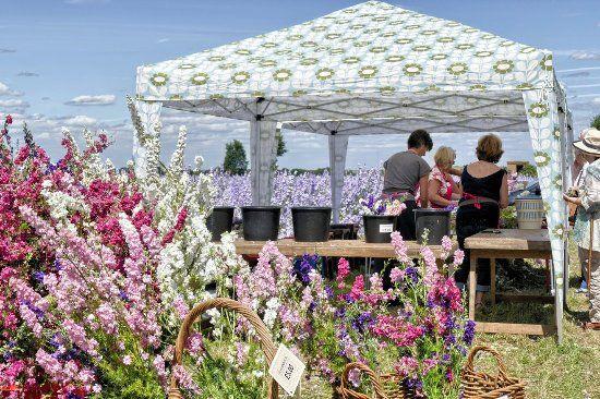 The Confetti Flower Field 2017