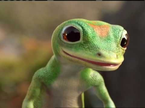 Geico Gecko And Otter Otters Gecko Animals