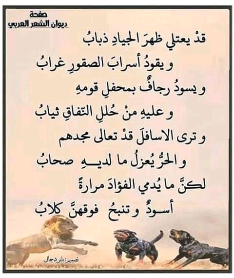 Pin By Samy Alam On شعر اقوال و حكم Beautiful Arabic Words Spirit Quotes Proverbs Quotes