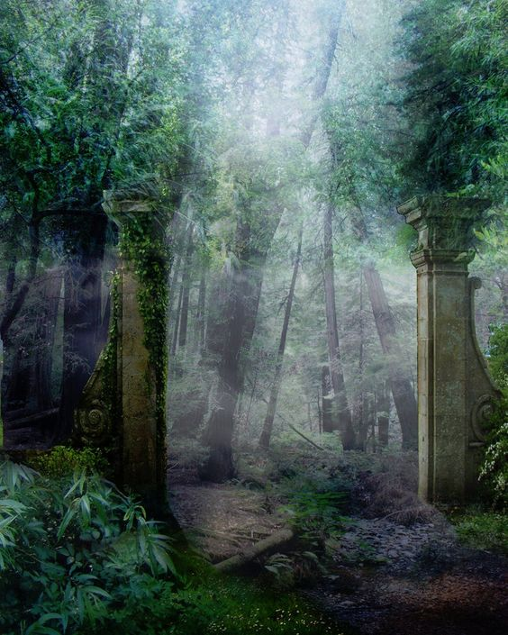 mysterious woods