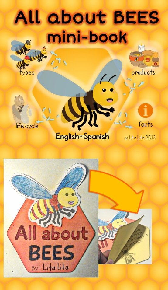 honey bees presentation speech In my opinion, photographs do the job best with this in mind, i created a set of honey bee educational posters that i use religiously in my presentations if i need help, i can glance at the back while i am speaking and use the bullet points or fun facts listed there the set is designed to make presenting easy.
