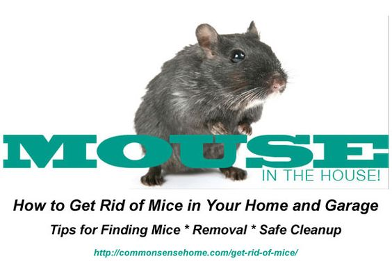 How To Get Rid Of Mice In Your Home And Garage Mice Garage And Home