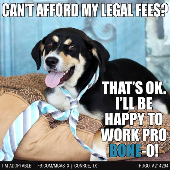 When in need, always choose a Doggy Defender - they work real cheap! ;) #lawyerdog ADOPTED!
