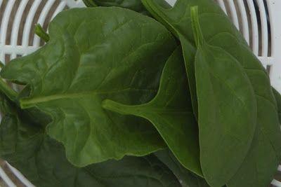 Aus der Küche und dem Garten: Spinat anbauen