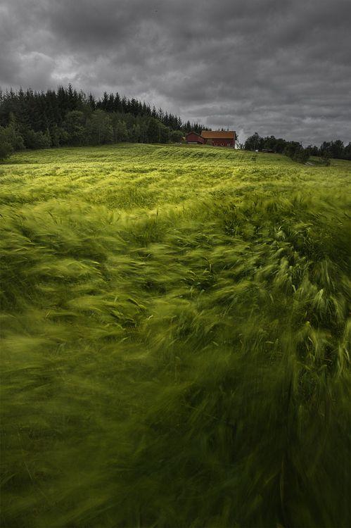 Green dream and dark clouds