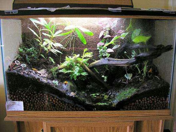 fish tank terrarium house idea 39 s diy pinterest