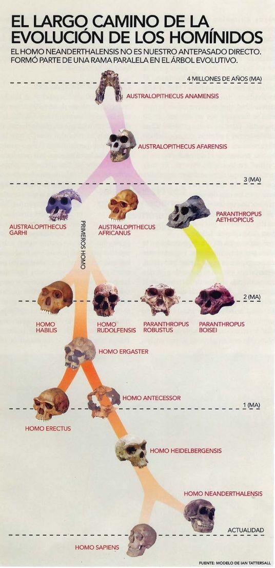 Evolucion Humana Evolución Humana Hominidos Evolucion Del Hombre