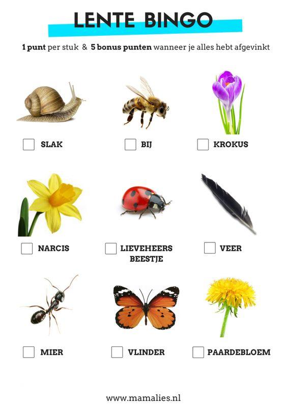 Trek de natuur in en ontdek de lente met de lente bingo! - MamaLies.nl