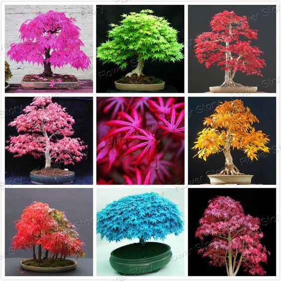 8 arten japanischen ahorn bonsai baum samen garten. Black Bedroom Furniture Sets. Home Design Ideas
