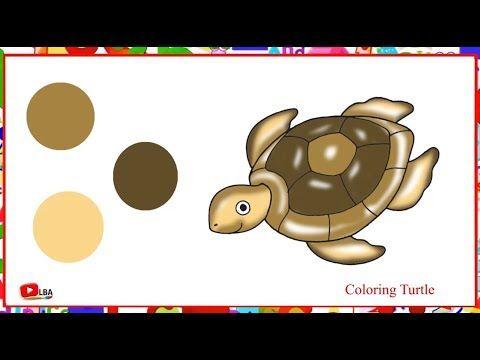 Coloring Cute Turtle Learn By Art Youtube Cute Turtles Youtube Art Art