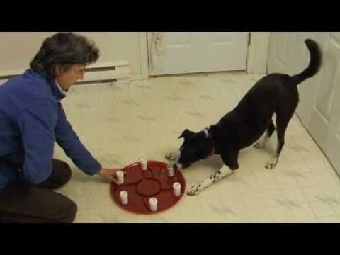 6 Introducing The Scent Training Wheel To A Dog Dog Training