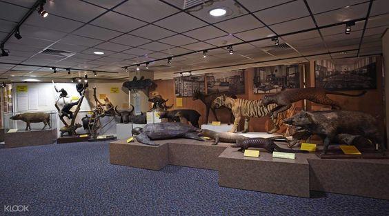 Lịch sử tự nhiên của thời tiền sử với rất nhiều bộ sưu tập