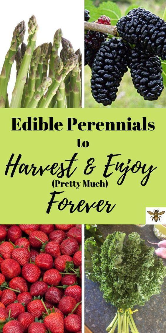 Edible-perennials-you-can-eat-forever