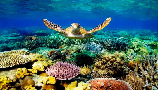 Google Image Result For Https Innerself Com Content Images 2016 540 Great Barier Reef 3 21 Jpg Gran Barrera De Coral Arrecifes De Coral Arrecife De Coral