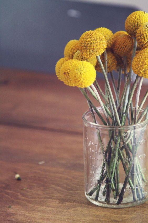 : Yellow Flowers, Billyball, Flower Ball, Yellow Wedding, Billy Buttons, Wedding Photo, Wedding Flowers