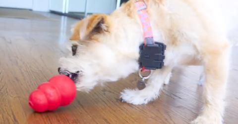 14 Ways To Keep Your Dog Busy While You Re At Work Dogs Your Dog Dog Toys