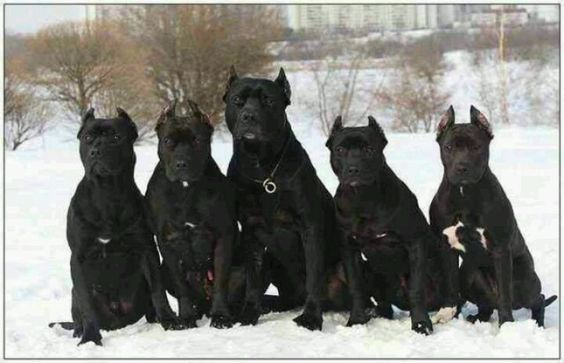 I Want All Of Them Honden Politiehonden Dieren
