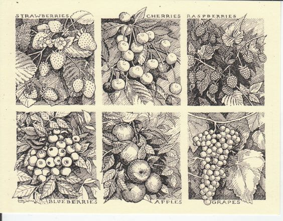 Fresh Fruits! This 6-pack of cards features drawings of fresh fruits: Strawberries, Cherries, Raspberries, Blueberries, Apples and Grapes