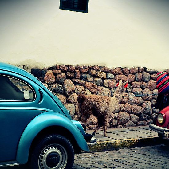 Peru Cusco - Latin America - Street - llama - People - Tradition - Vintage Retro