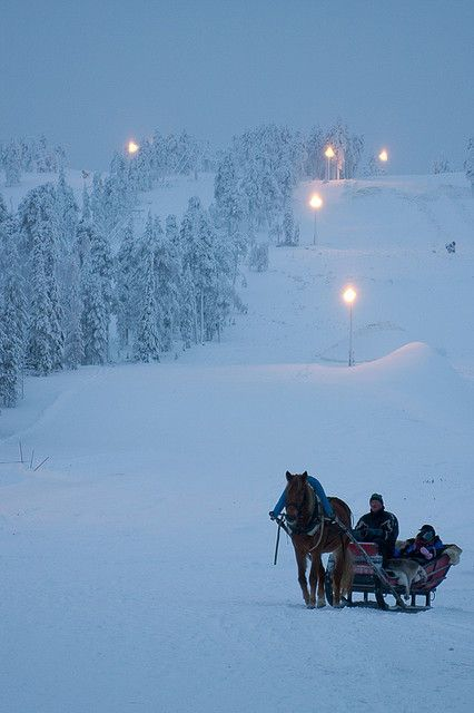 Horse Sled / Flickr - Photo Sharing!